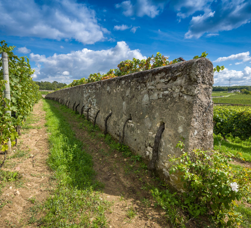 vignes-murs